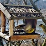 Krmítko pro ptáky a ptačí budka…
