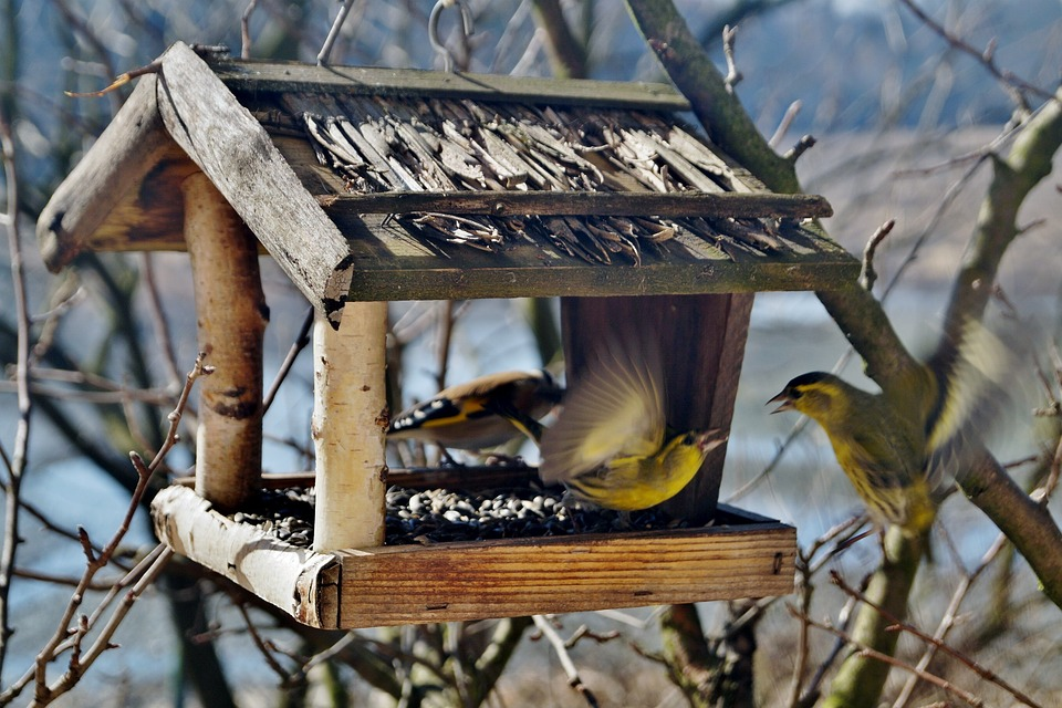 birds-664232_960_720