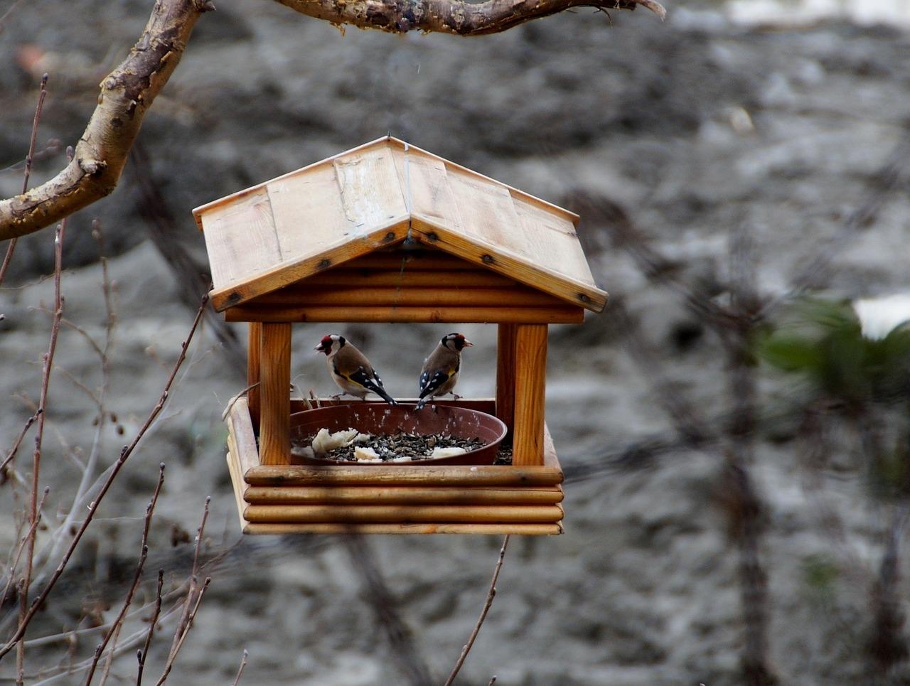 birds-708238_1280
