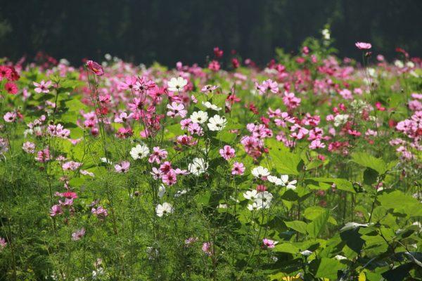 flower-garden-1486942_960_720