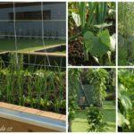Vyvýšené zeleninové záhony ze dřeva