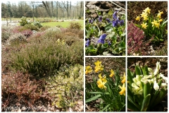Zahrada začátkem dubna 2015b