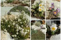 Zahrada začátkem dubna 2015d