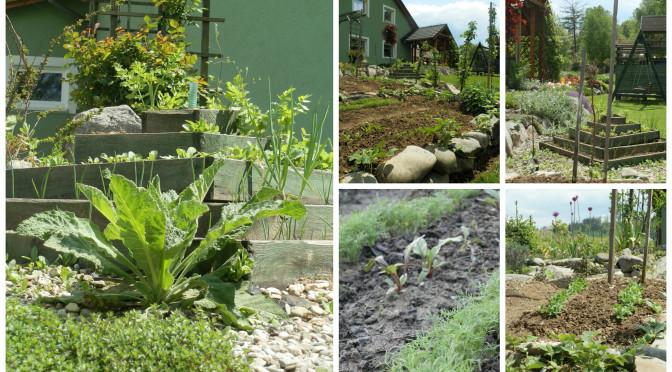 Zeleninová zahrádka v malém…