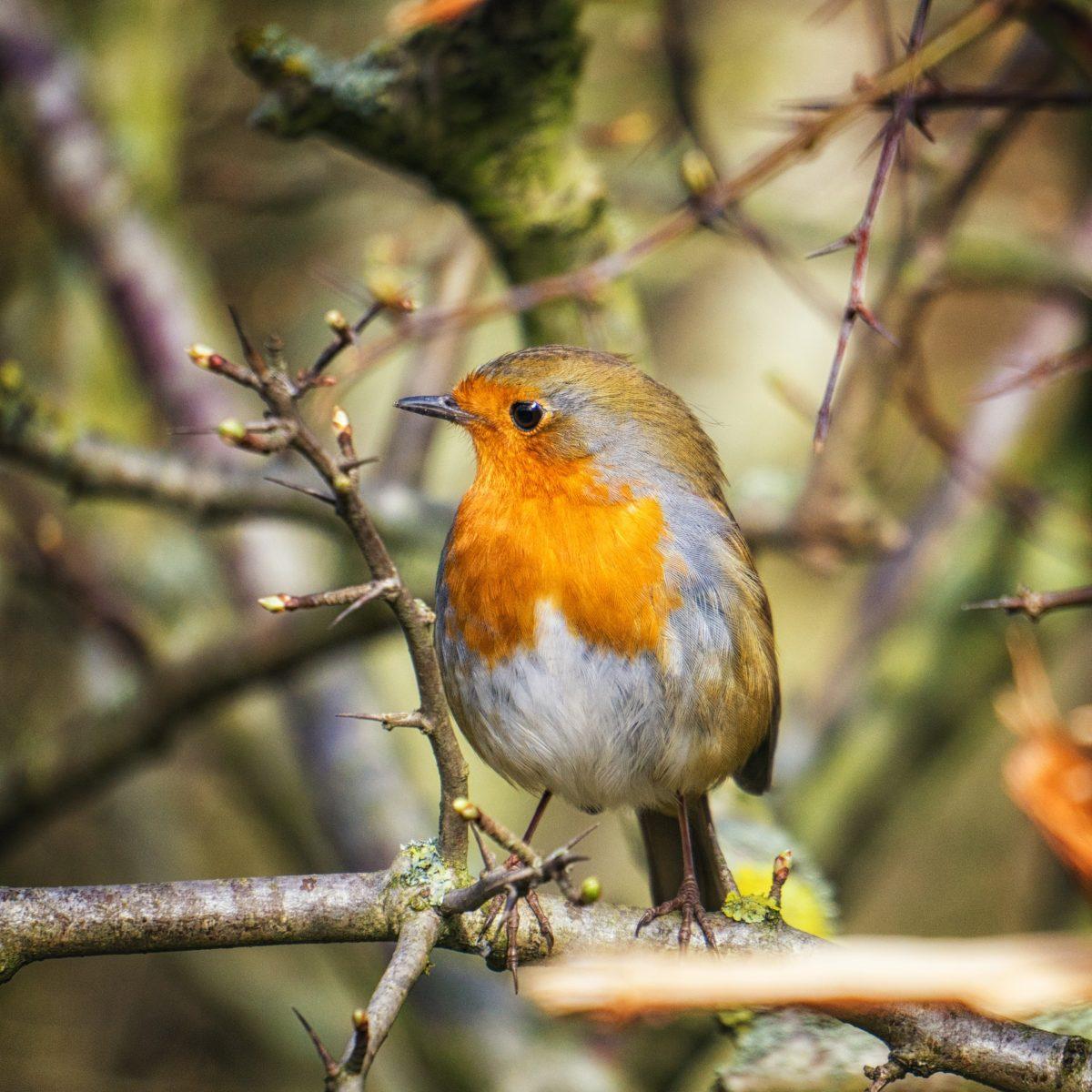 6 tipů, jak přilákat do své zahrady ptačí zpěv