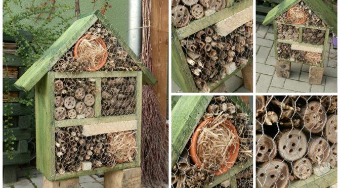 Jak zabydlet užitečný hmyz ve své kvetoucí zahradě?
