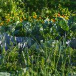 7 jarních tipů (nejen) pro vyvýšené zeleninové záhony