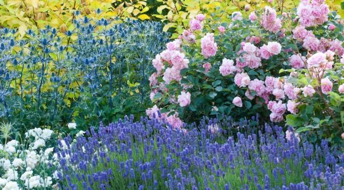 Královna květin a její dokonalý doprovod