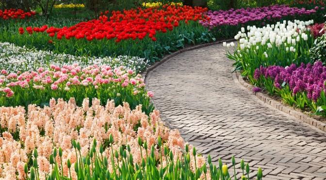 10 nejkrásnějších květů jara